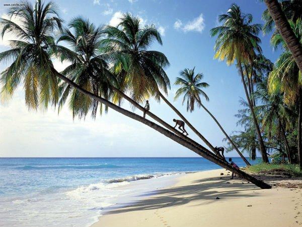 stränder på Barbados