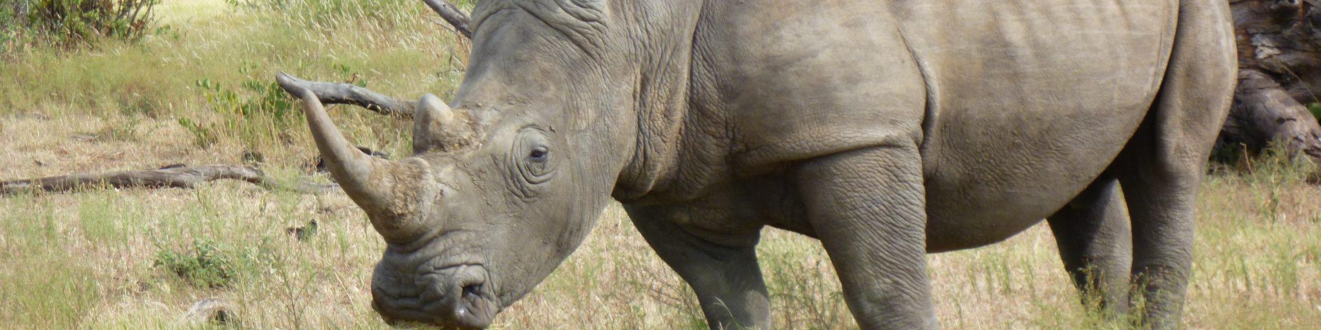 2 min film safari, South Africa 1