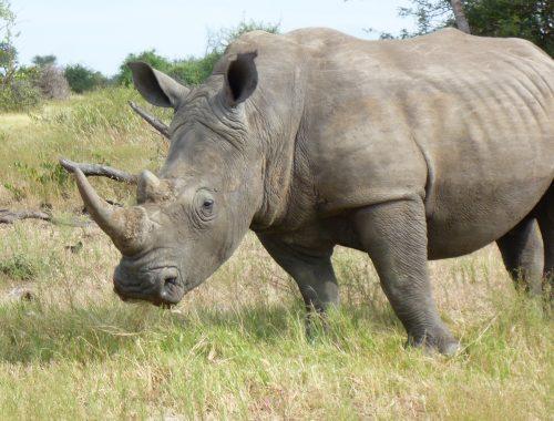 2 min film safari, South Africa 8