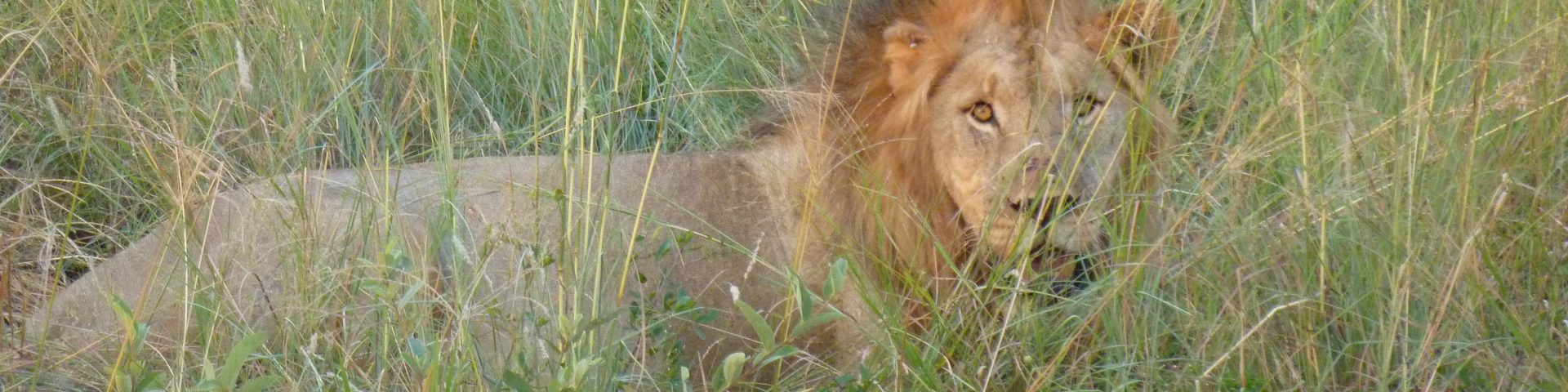 Safari del 2, Sydafrika - Madikwe 1