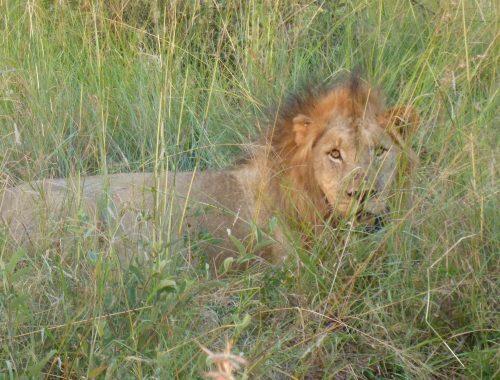 Safari del 2, Sydafrika - Madikwe 3