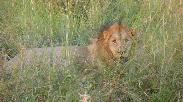 Safari Madikwe – del 2