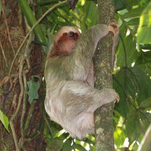Costa Rica 37