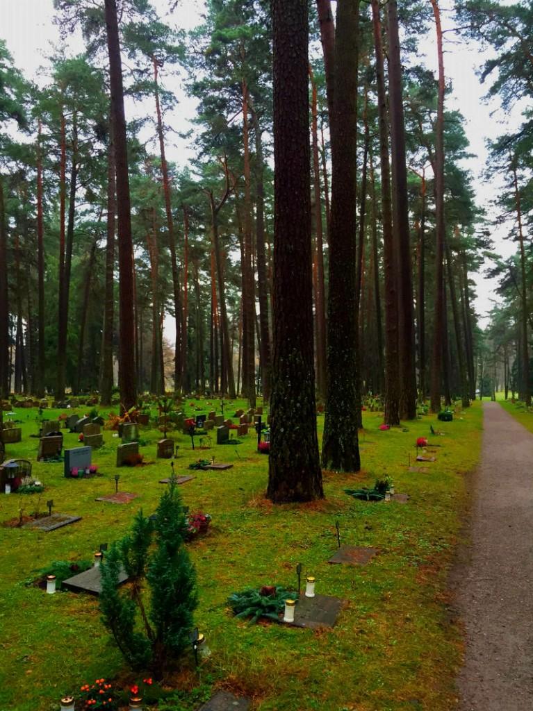 skog6