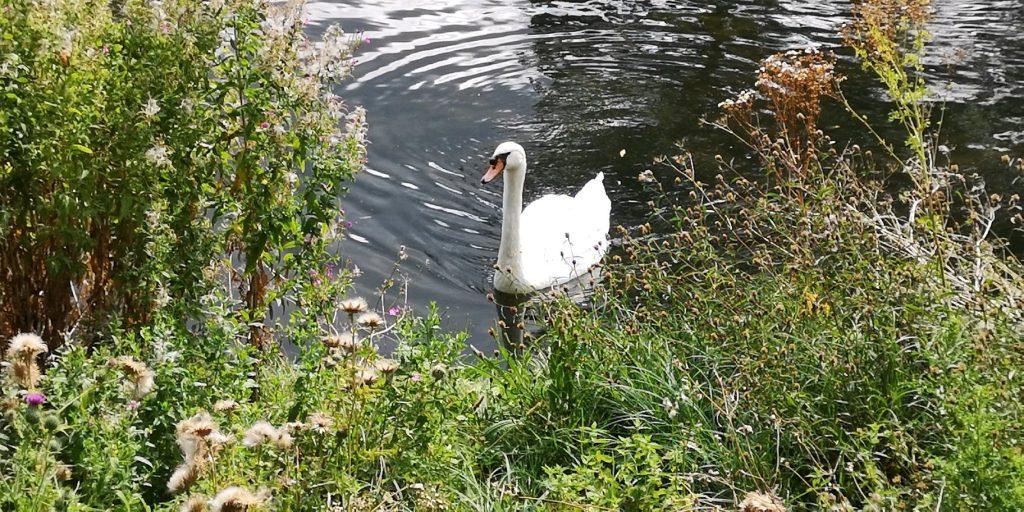 Ett besök i Regents Park, London 7