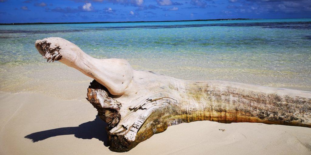 Bonaire, återbesöket 4