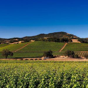Napa Valley - vin och mysiga guest houses 1
